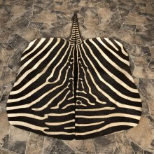 African Zebra Taxidermy Throw Rug For Sale #20068 @ The Taxidermy Store