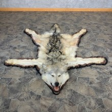 Alaskan Gray Wolf Full Rug Taxidermy Mount For Sale