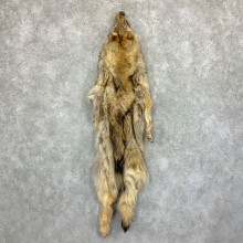 Alaskan Yukon Wolf Tanned Hide For Sale #22879 @ The Taxidermy Store