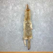 Alaskan Yukon Wolf Tanned Hide For Sale #22881 @ The Taxidermy Store