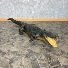 Alligator Life-Size Mount For Sale #22384 @ The Taxidermy Store