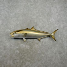 Amberjack Taxidermy Fish Mount #17338 For Sale @ The Taxidermy Store