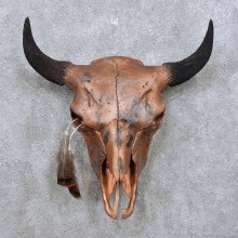 American Buffalo/Bison Skull Taxidermy Mount For Sale