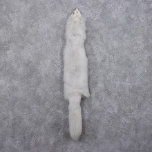 Arctic Fox Fur Taxidermy For Sale