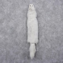 Arctic Fox Taxidermy Hide - Skin - Fur #12411 For Sale @ The Taxidermy Store