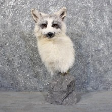 Arctic Marble Fox Pedestal #11706 - The Taxidermy Store