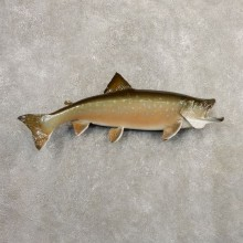 Arctic Char Fish Mount #20871 For Sale @ The Taxidermy Store