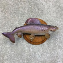 "14"" Arctic Grayling Taxidermy Fish Mount For Sale"