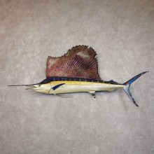 Atlantic Sailfish Taxidermy Fish Mount For Sale