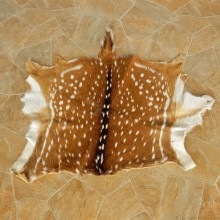 Axis Deer Hide Taxidermy Skin #13017 For Sale @ The Taxidermy Store