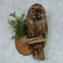 Barred Owl Reproduction Taxidermy Mount For Sale