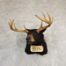 Beer Shoulder Mount For Sale #21189 @ The Taxidermy Store