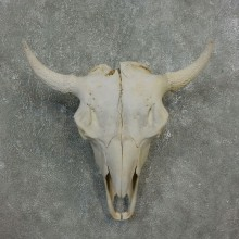 Buffalo Bison Skull Mount For Sale #17677 @ The Taxidermy Store