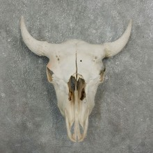 Buffalo Bison Skull Mount For Sale #17679 @ The Taxidermy Store