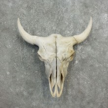Buffalo Bison Skull Mount For Sale #17687 @ The Taxidermy Store