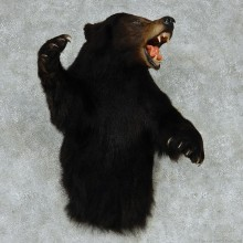 Black Bear Half Life Size Taxidermy Mount #13132 For Sale @ The Taxidermy Store