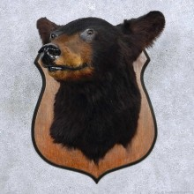 Black Bear Head Taxidermy Mount For Sale #14115 @ The Taxidermy Store