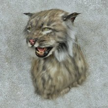 Reproduction Black Lynx Taxidermy Shoulder Mount For Sale