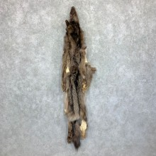 Black Alaskan Wolf Tanned Hide For Sale #22883 @ The Taxidermy Store