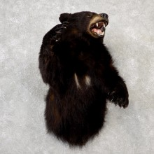 vBlack Bear 1/2-Life-Size Mount For Sale #19056 @ The Taxidermy Store