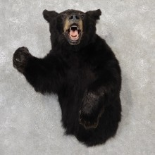 Black Bear 1/2-Life-Size Mount For Sale #19159 @ The Taxidermy Store