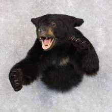 Black Bear 1/2-Life-Size Mount For Sale #22581 @ The Taxidermy Store