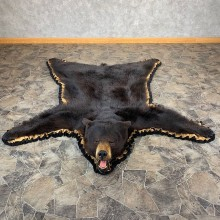 Black Bear Full-Size Rug For Sale #21172 @ The Taxidermy Store