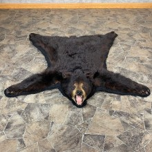 Black Bear Full-Size Rug For Sale #21173 @ The Taxidermy Store