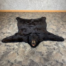 Black Bear Full-Size Rug For Sale #21177 @ The Taxidermy Store