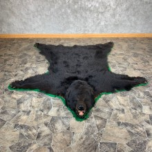 Black Bear Full-Size Rug For Sale #21179 @ The Taxidermy Store