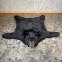 Black Bear Full-Size Rug For Sale #21958 @ The Taxidermy Store