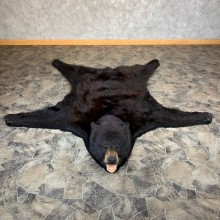 Black Bear Full-Size Rug For Sale #21961 - The Taxidermy Store