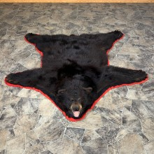 Black Bear Full-Size Taxidermy Rug Mount For Sale