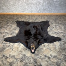 Black Bear Full-Size Rug For Sale #22107 @ The Taxidermy Store