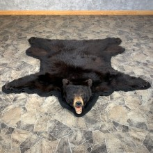 Black Bear Full-Size Rug For Sale #22111 @ The Taxidermy Store