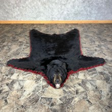 Black Bear Full-Size Rug For Sale #22113 @ The Taxidermy Store