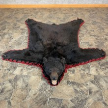 Black Bear Full-Size Rug For Sale #23030 @ The Taxidermy Store