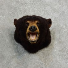 Black Bear Head Mount For Sale #17174 @ The Taxidermy Store