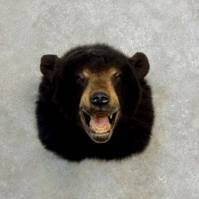 Black Bear Head Mount For Sale #17176 @ The Taxidermy Store