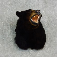 Black Bear Mount For Sale #17650 @ The Taxidermy Store