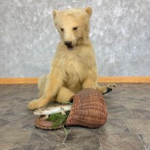 Blonde Black Bear Taxidermy Mount #22004 For Sale @ The Taxidermy Store