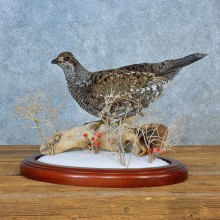 Blue Grouse Bird Mount For Sale #15565 @ The Taxidermy Store