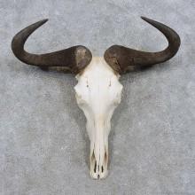 Blue Wildebeest Skull & Horns European Mount For Sale