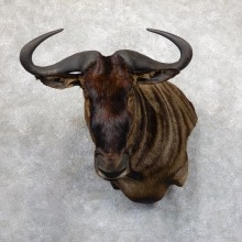 Blue Wildebeest Wall Pedestal Mount For Sale #19545 @ The Taxidermy Store