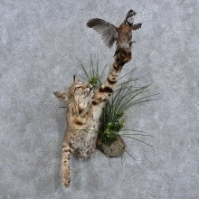 Bobcat & Quail 1/2-Life-Size Mount For Sale #15666 @ The Taxidermy Store