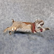 """Steampunk"" Bobcat Life-Size Taxidermy Mount For Sale"