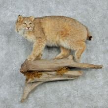 Standing Bobcat Life-Size Mount
