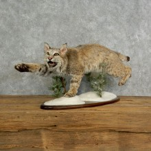 Bobcat Life-Size Mount For Sale #17026 @ The Taxidermy Store
