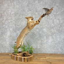 Bobcat With Bobwhite Quail Life-Size Mount For Sale #21429 @ The Taxidermy Store