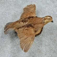 Flying Bobwhite Quail